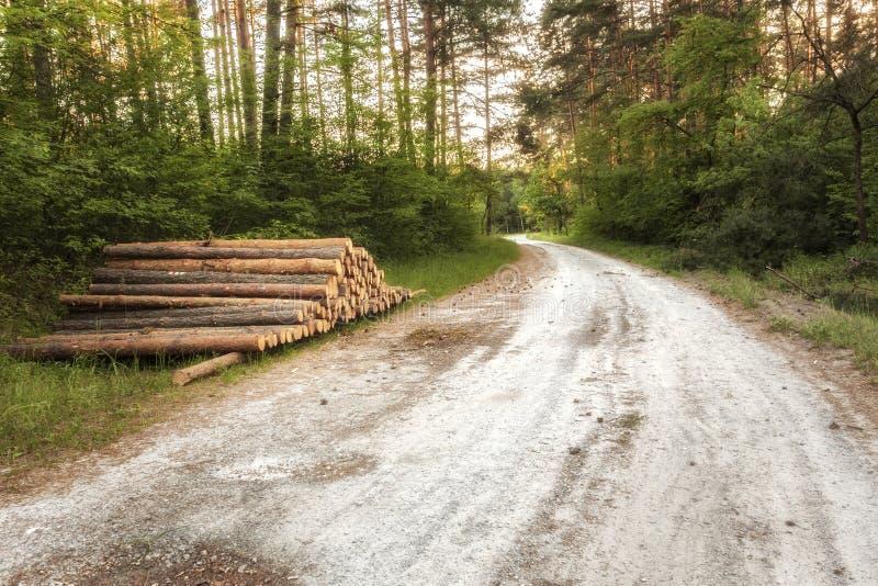 Högen av trädstammar lägger undan skogvägen royaltyfri foto
