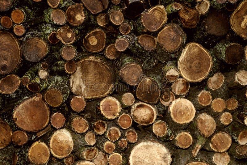 Högen av träpelare, det överlappade, härlig naturlig wood bakgrund arkivbild