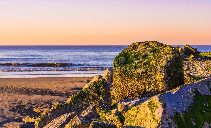 Högen av vaggar täckt i havsogräs, det blåa havet med vågor och färgrik himmel under solnedgång stranden av Blankenberge, Belgien arkivfoto