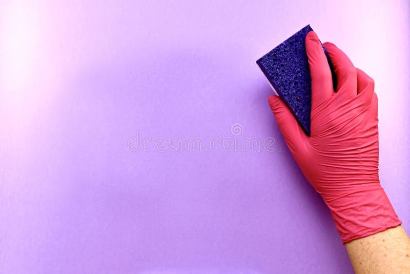 Höger hand i en gummihandske med en tvättsvamp av cellulosa, en porös yta, på en lila bakgrund arkivbild