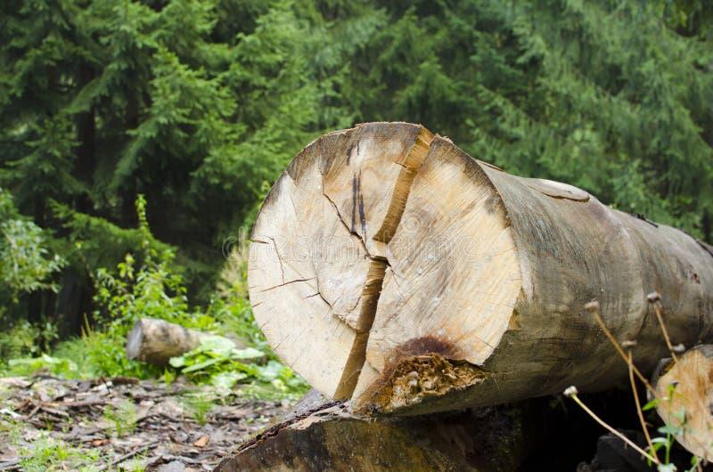högg av trees royaltyfri fotografi