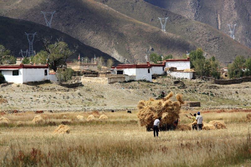 Höglands- bönder som arbetar i fälten arkivbilder