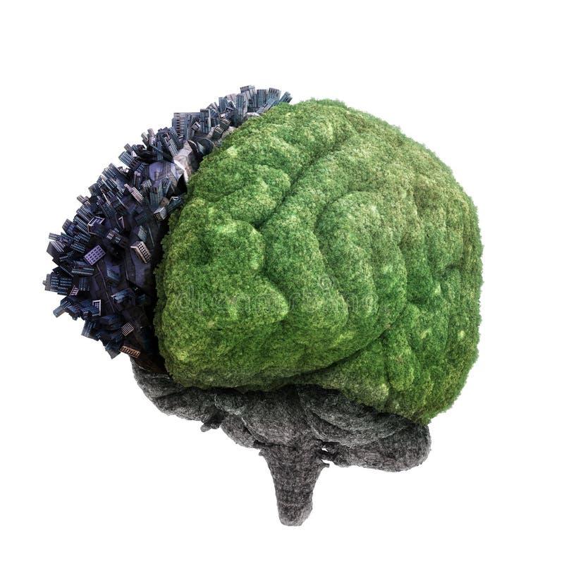 Högra och vänstra hjärnhalvklot royaltyfri illustrationer