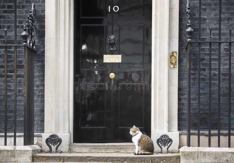 Högsta råttfångarekatt för Downing Street 10 fotografering för bildbyråer