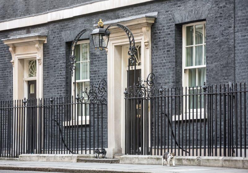 Högsta råttfångarekatt för Downing Street 10 royaltyfri bild