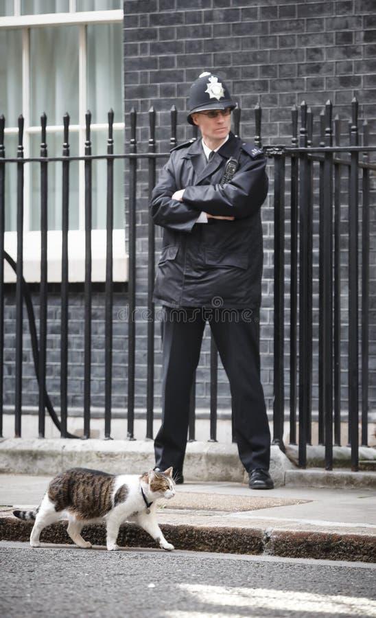 Högsta råttfångarekatt för Downing Street 10 royaltyfria foton