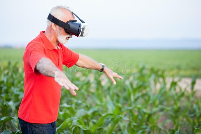 Högt agronom- eller bondeanseende i havrefält och använda VR-skyddsglasögon arkivfoton
