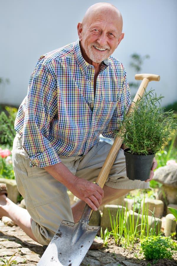 Högt arbeta i trädgården för man royaltyfri fotografi