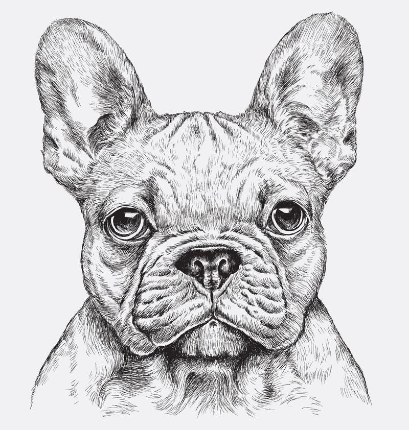 Högt detaljerad hand dragen vektorillustration för fransk bulldogg vektor illustrationer