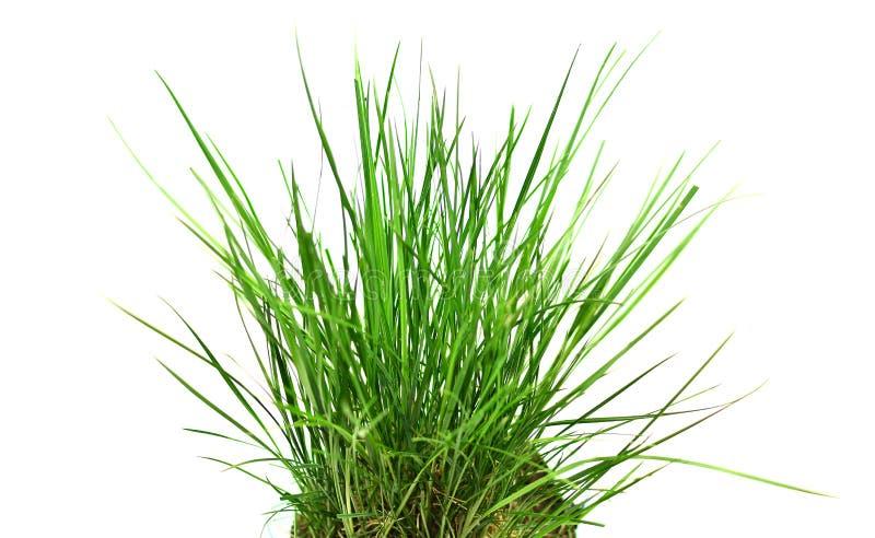 högt gräs arkivbild