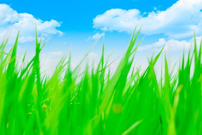 Högt grönt gräs för färgrik suddighet med blå himmel royaltyfri illustrationer