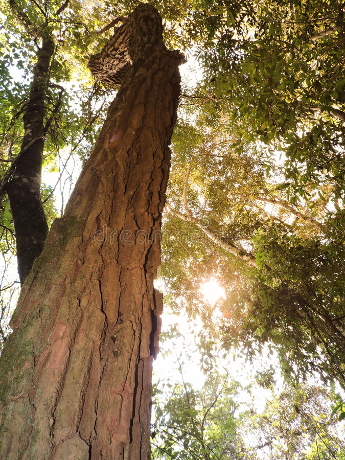 Högt träd i naturen på våren royaltyfri foto