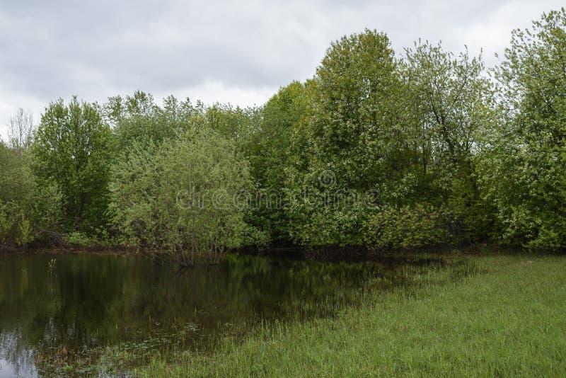 Högt vatten i fälten fotografering för bildbyråer