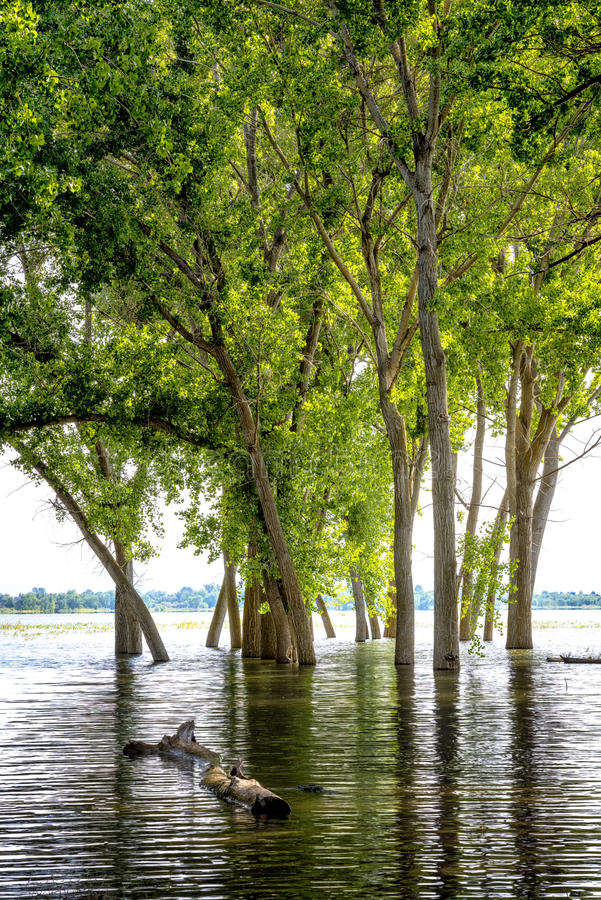 Högt vatten på sjön Lowell Idaho och den översvämmade trädreflexionen royaltyfri fotografi