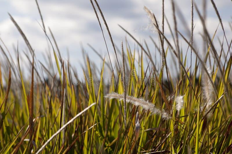 Högväxt fält arkivbild