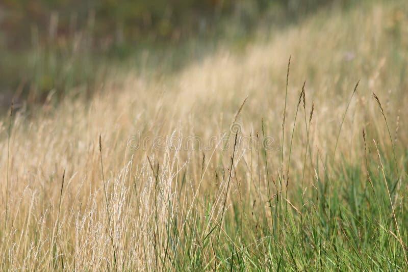 högväxt gräs royaltyfria foton