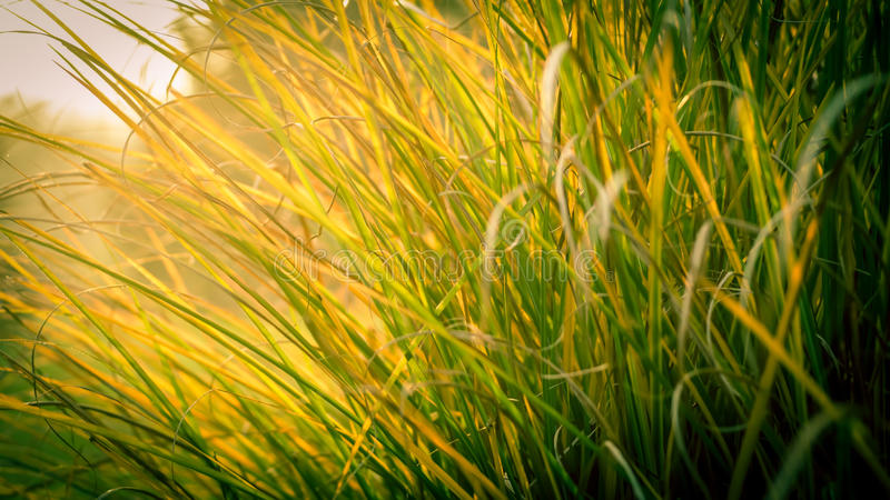 Högväxt gräs arkivbild