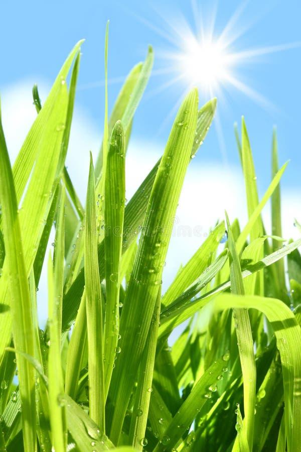 högväxt gräs arkivfoton