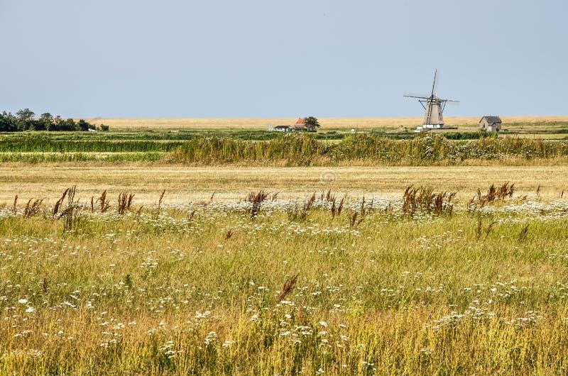 Högväxt gräs, väderkvarn, vildblommor arkivfoton