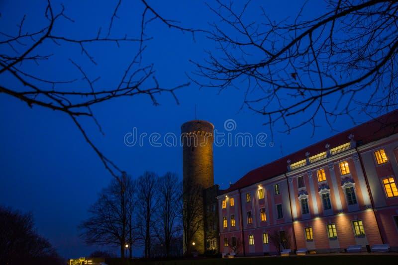 Högväxt Hermann torn och parlamentbyggnad Toompea regulatorer arbeta i trädgården, Tallinn, Estland Nattlandskap med belysning royaltyfria foton