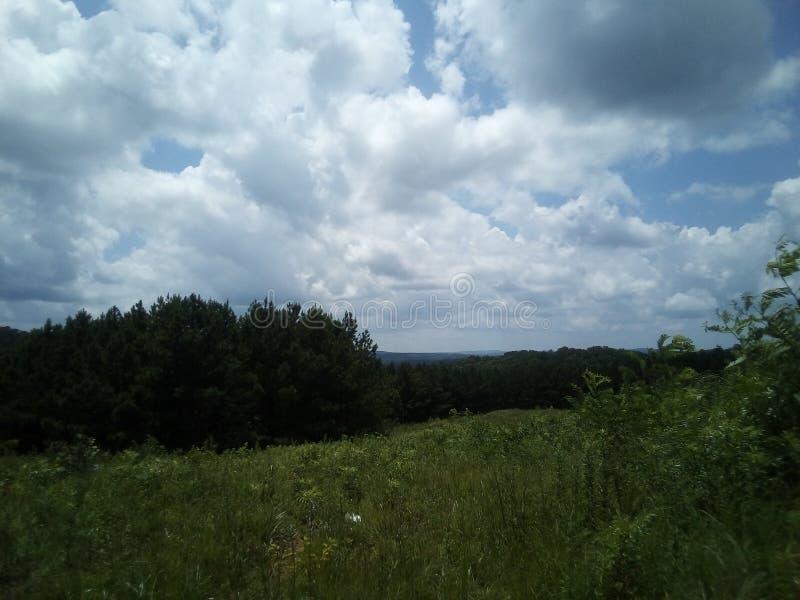 Högväxt moutaingräs under en blå himmel royaltyfria bilder