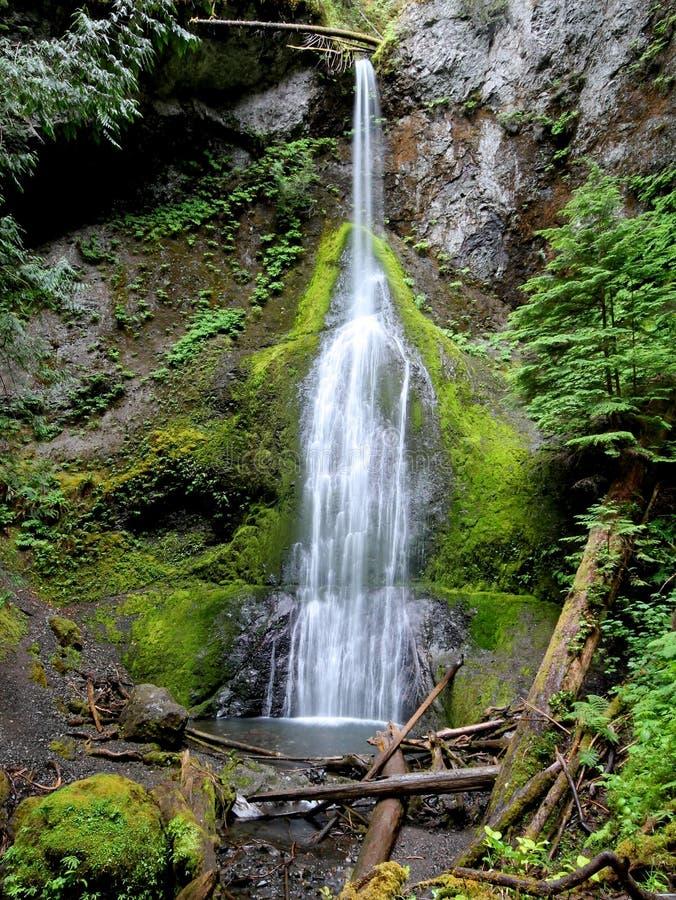 Högväxt och tunn vattenfall i Washington State arkivbilder