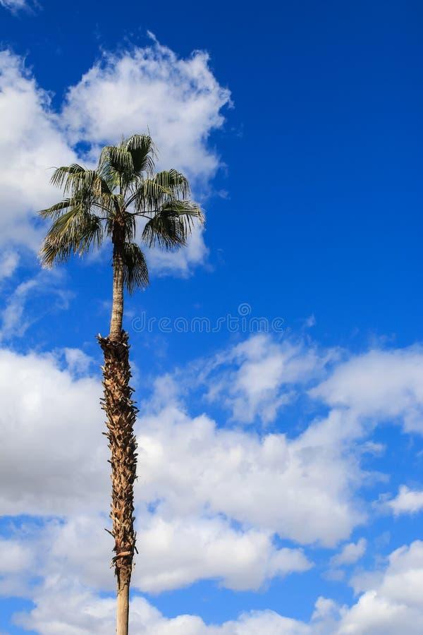 Högväxt palmträd mot blå himmel med moln - vertikalt skott royaltyfri fotografi