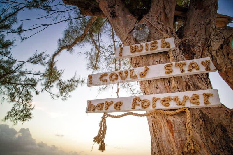 Högväxt träd med tecknet jag önskar att jag kunde bli för evigt på stranden på solnedgången royaltyfri bild