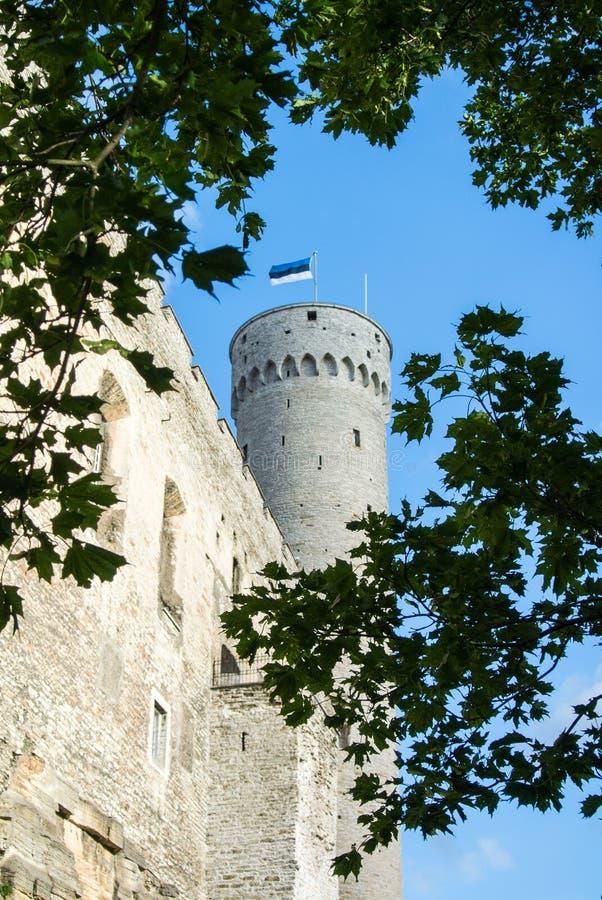 Högväxta Hermann torn- och trädfilialer, Toompea, regulatorer arbeta i trädgården, Tallinn royaltyfri foto