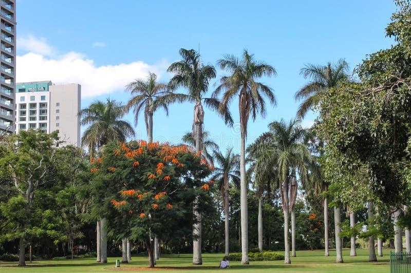 Högväxta palmträd och kunglig poincianaDelonixregia i Brisbanes stadsbotaniska trädgårdar under blåa skys med två personer som si royaltyfria bilder
