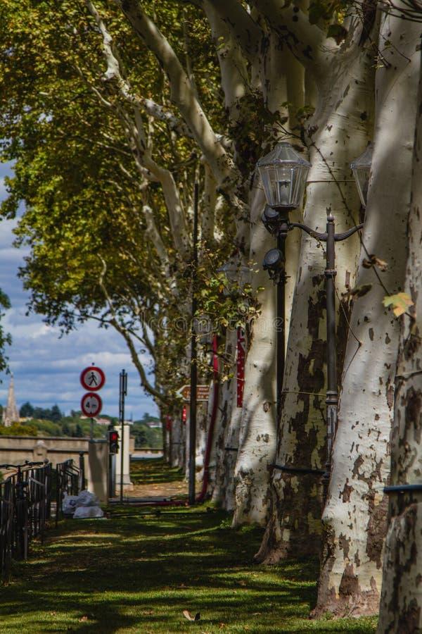 Högväxta träd i solljuset royaltyfria bilder