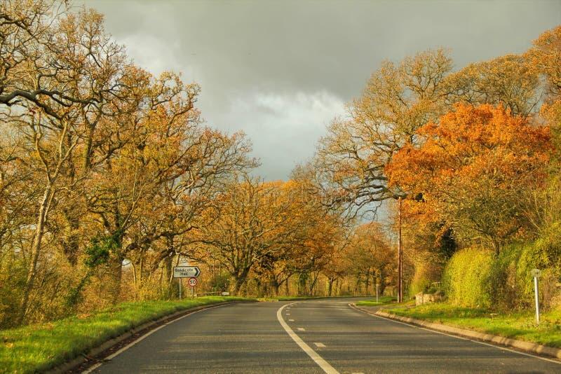Högväxta träd mellan den långa vägen på landssidodrev royaltyfria foton