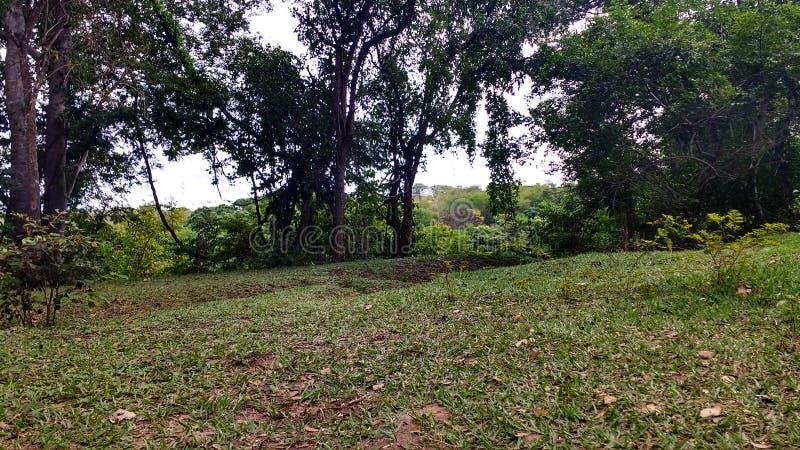 Högväxta träd och gräs arkivbilder