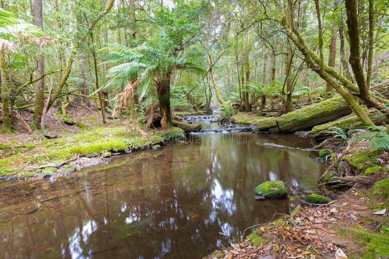 Högväxta träd som täckas med grön mossa som växer near liten vik, skog på royaltyfri fotografi