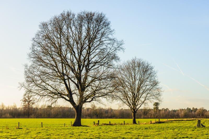 Högväxta två och avlövade träd i ett plant lantligt landskap arkivbild