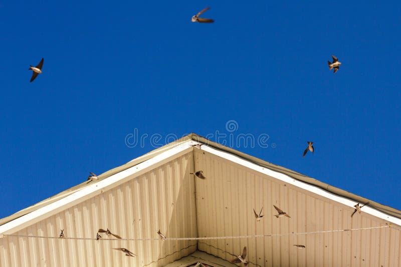 Högvaktelägg i rede med fjädrar på vit bakgrund arkivfoton