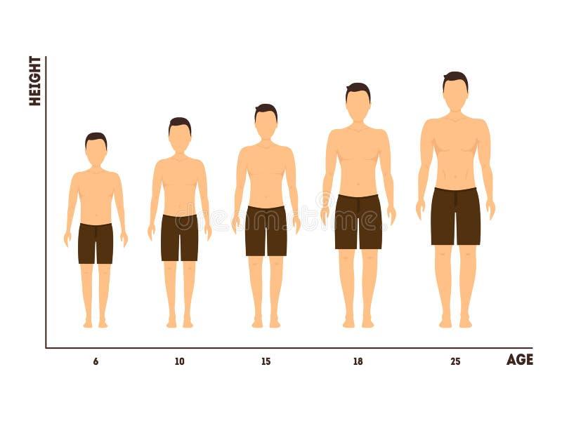 Höhen-und Alters-Maß des Wachstums von Jungen zu Mann Vektor stock abbildung