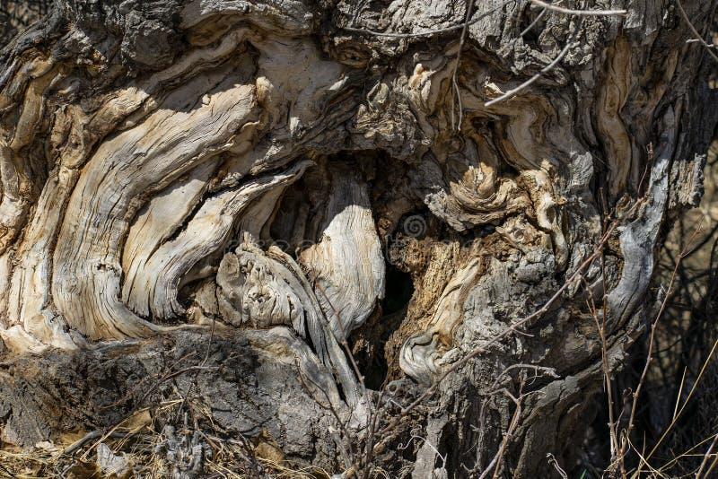 Höhle eines knotigen Baums stockbild
