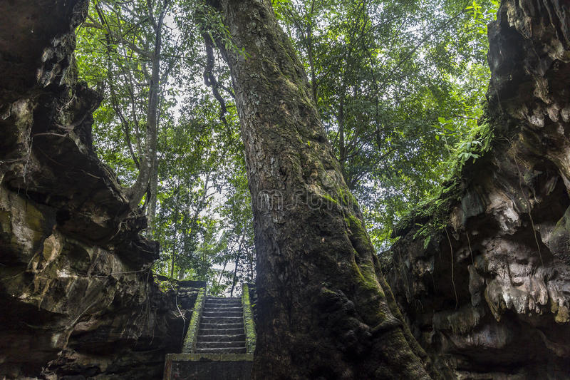 Höhleneingang auf Java, Indonesien lizenzfreie stockfotos