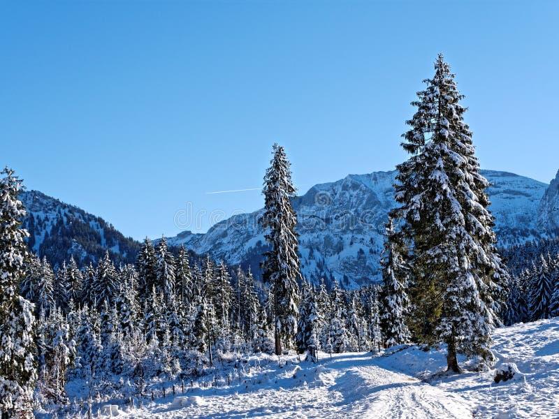 Höja spåret i skogslandskapet i snöbergen med blå himmel royaltyfri fotografi