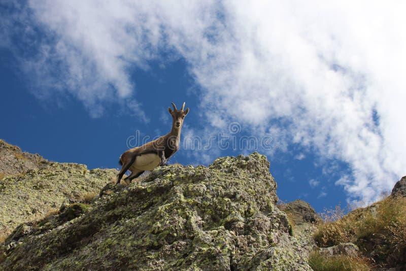 Höjdpunkt i de italienska fjällängarna royaltyfri foto
