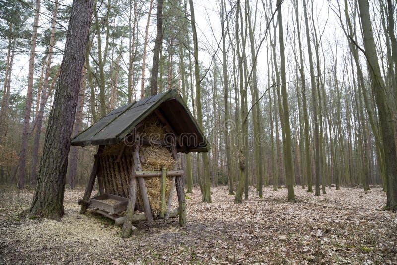 Hökugge i skogen royaltyfria foton