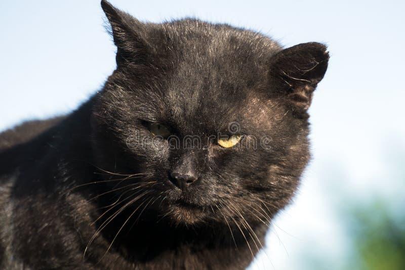 Höllischer Bandit und Räuber der schwarzen Katze stockfoto