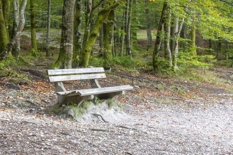 Hölzerne Bank im Sommerwald lizenzfreie stockfotografie