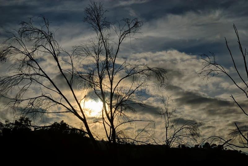 Hölzerne Baumaste silhouettiert gegen einen dunklen und bewölkten Nachmittagshimmel lizenzfreies stockfoto