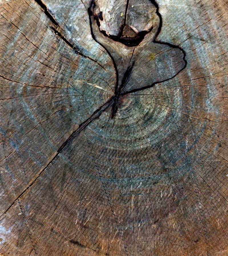 Hölzerne Beschaffenheit des Baumstumpfs lizenzfreies stockfoto