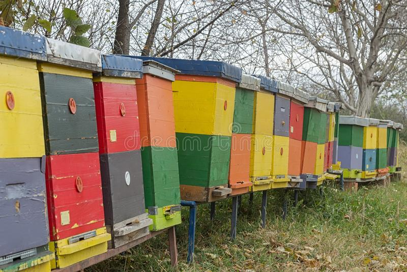Hölzerne Bienenstockkolonie lizenzfreie stockbilder