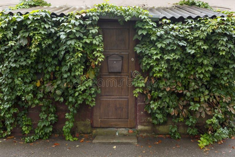Hölzerne braune Tür mit einem Verschluss Um ist viel Grün Wolkiges Wetter stockfoto