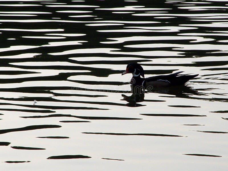 Hölzerne Ente-Schattenbild