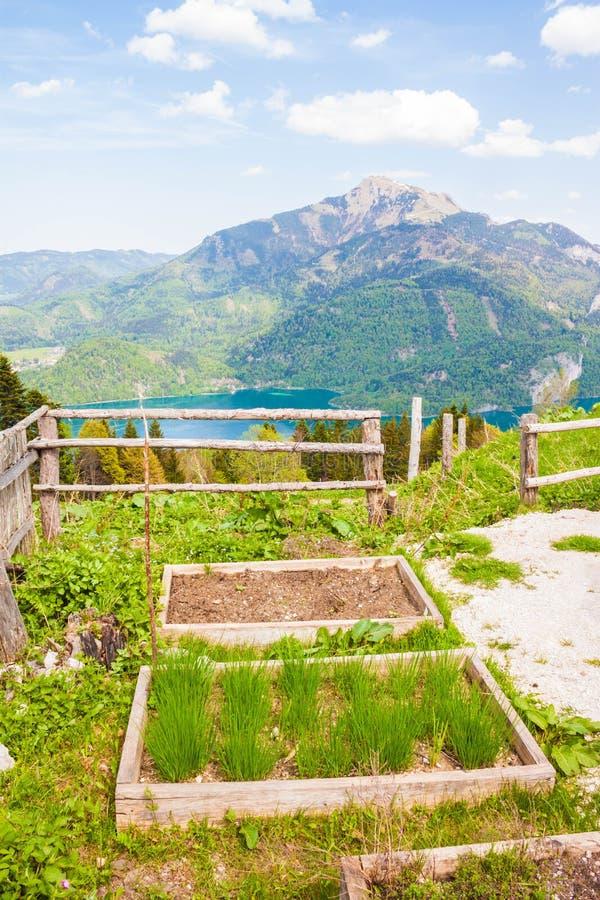 Hölzerne Gartenbetten für wachsende Kräuter und Gemüse mit Blick auf Berge und See stockbild
